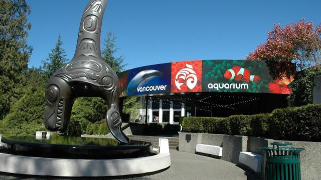 Ingressos para o Ripley's Aquarium of Canada