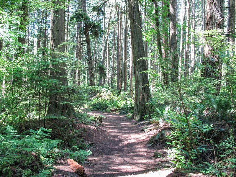 Caminhos do Pacific Spirit Regional Park em Vancouver