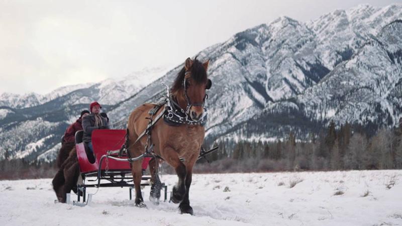 Passeio romântico de trenó em Banff